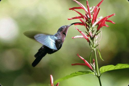 Coevolution ( Read ) | Biology | CK-12 Foundation