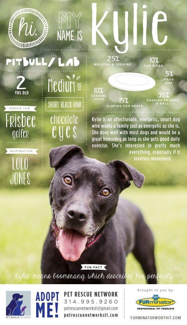 Pet Adoption Poster Series on Behance