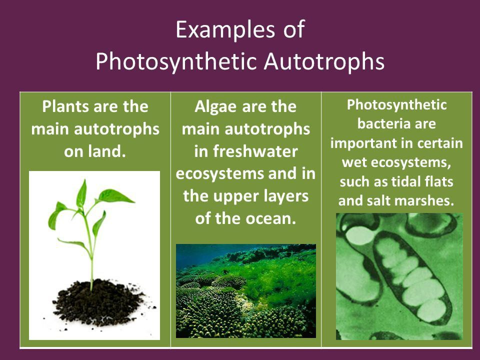 Chapter 3 The Biosphere. - ppt video online download