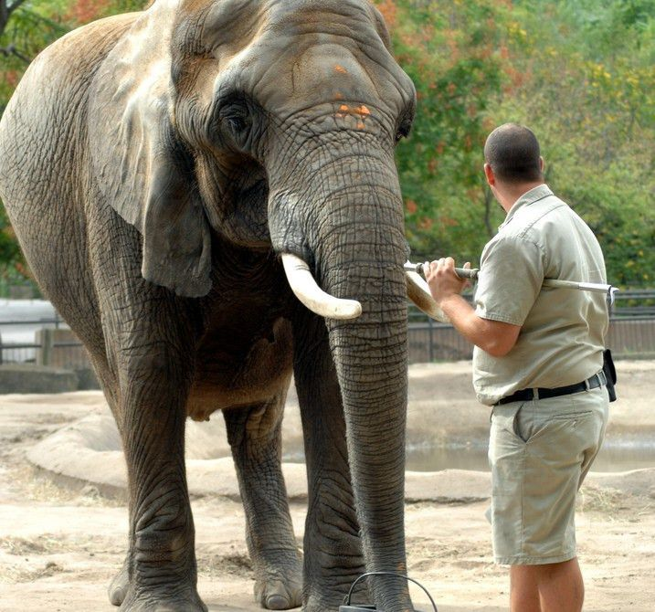 How to Become a Doctor of Zoological Medicine
