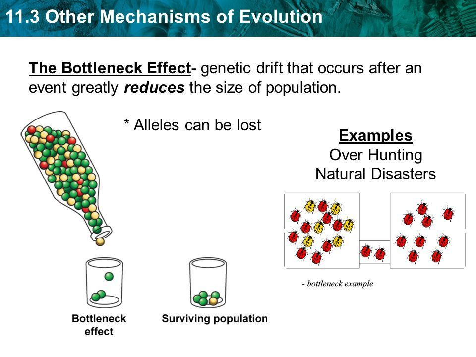 Gene flow is the movement of alleles between populations. - ppt ...
