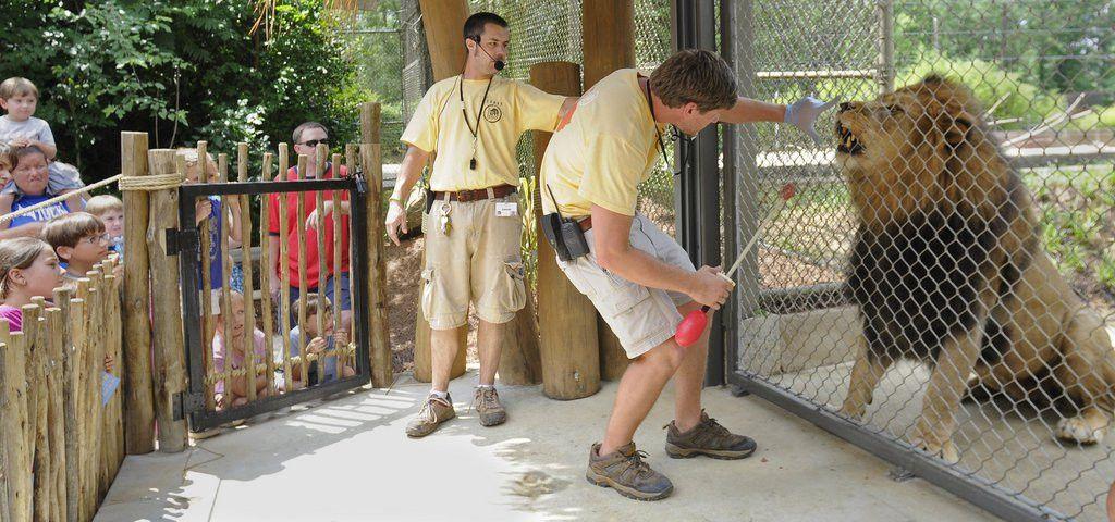 Birmingham Zoo opens Predator Zone Saturday, hear it roar (with ...
