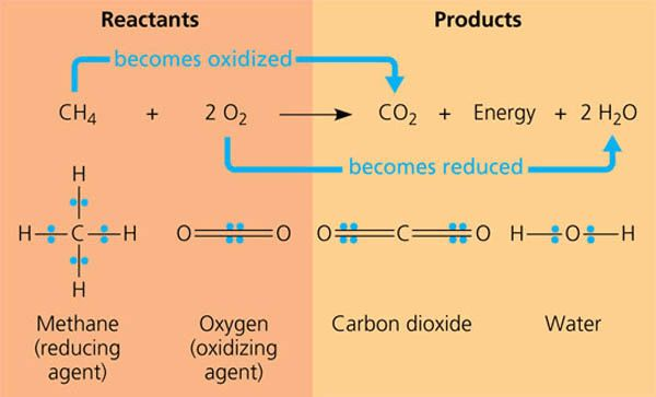1 answer: Chemistry: What are examples of oxidation reactions and ...