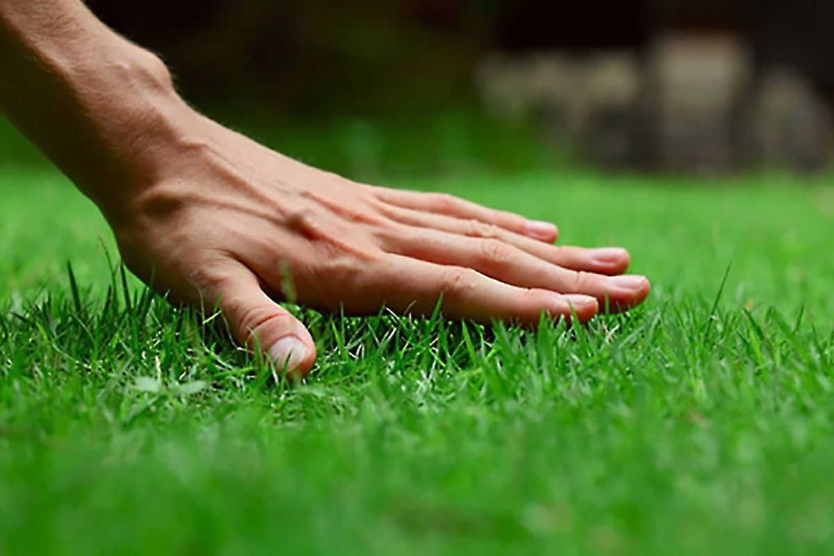 How to Start a Lawn Care or Landscaping Business