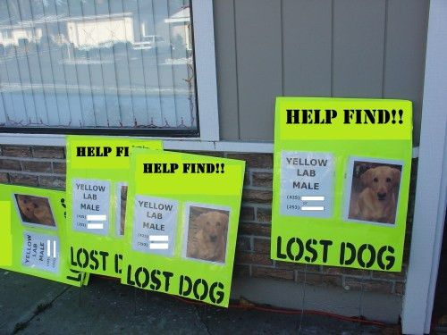 Posters 5+5+55 – Missing Pet Partnership