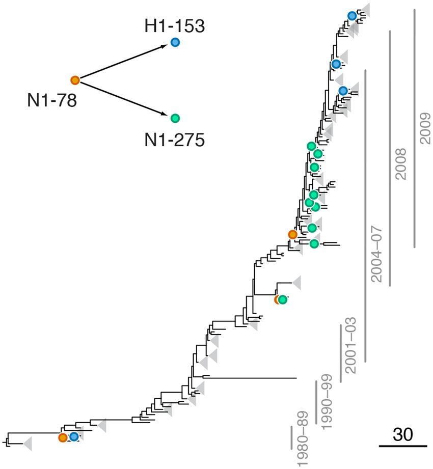 Example of putative inter-gene epistasis between sites N1-78 and ...