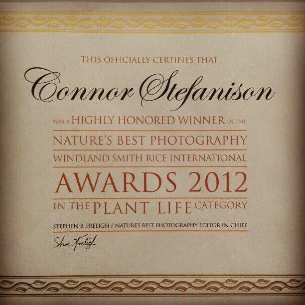 60 best Certificate design images on Pinterest | Certificate ...