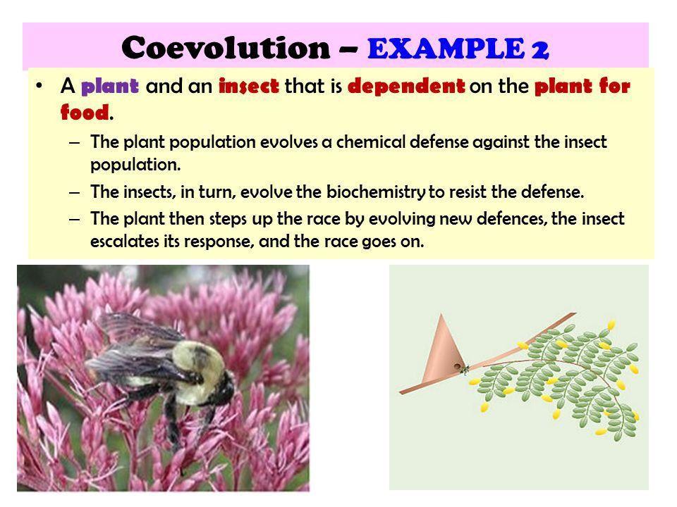 15.3 Mechanisms of EVOLUTION - ppt video online download
