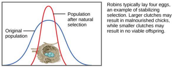 2) Phenotype Selection - Evolution