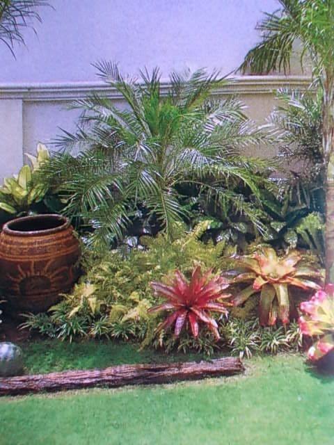 Tropical gardening on Pinterest Tropical Gardens