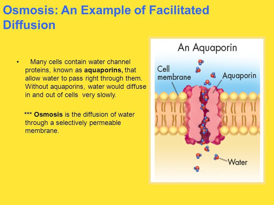 7.4 Homeostasis and Cells, Pgs - ppt download