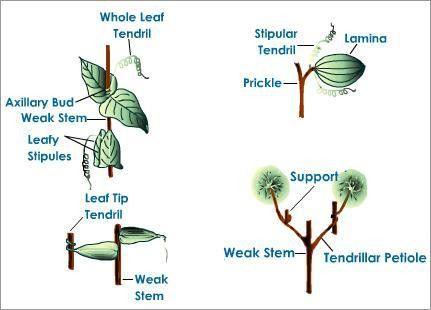 Plant and Animal Breeding, Comparative Anatomy | Tutorvista.com