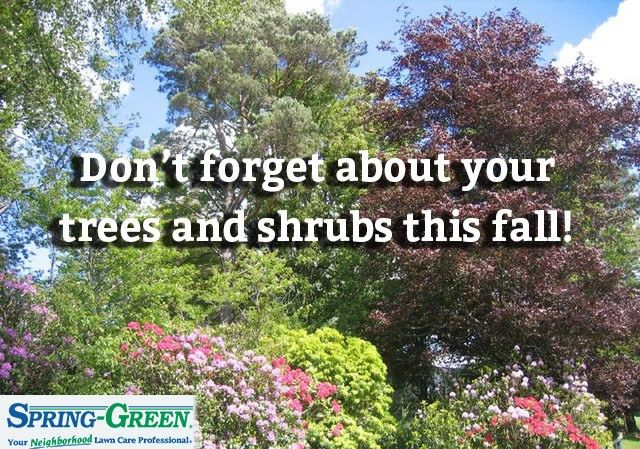Don't Forget About Your Tree and Shrubs This Fall