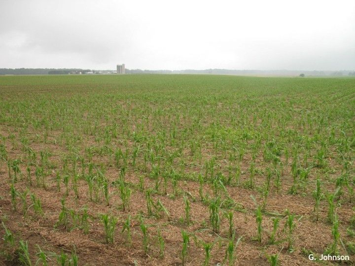 Hail Damage to Agronomic Crops « Weekly Crop Update