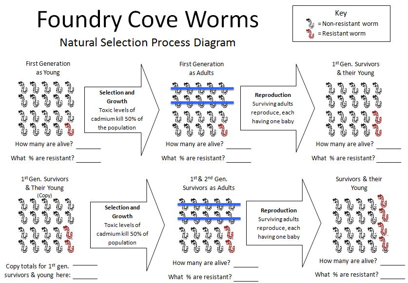 Natural Selection at Foundry Cove | Cary Institute of Ecosystem ...
