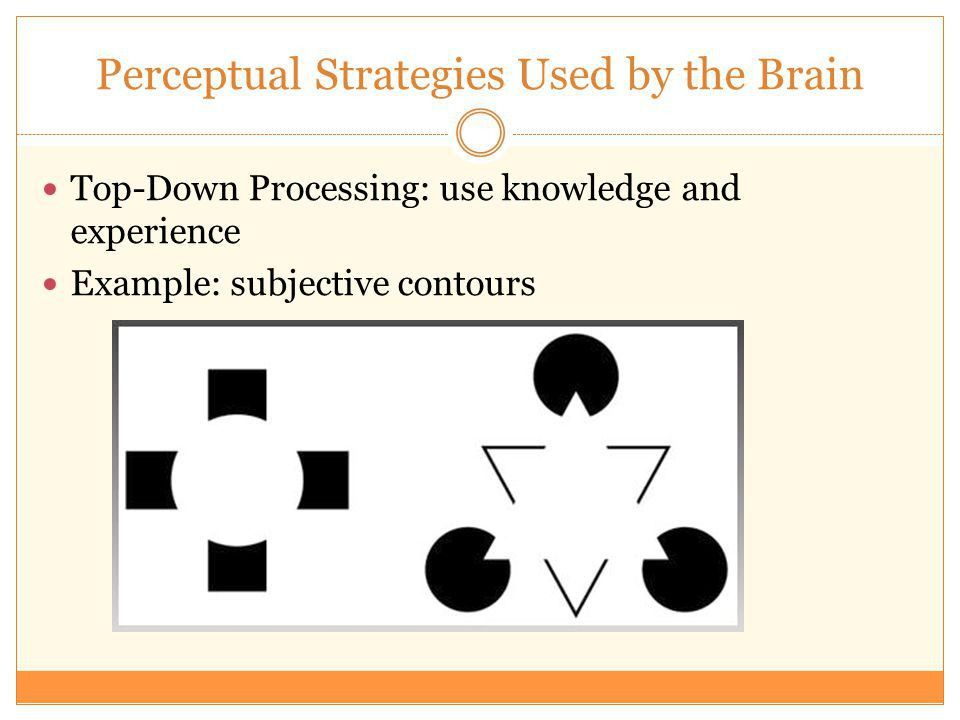 Perception. Overview Perceptual Problems Solved by the Brain ...