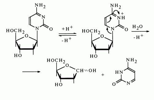Stability of N-Glycosidic Bonds