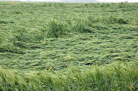Skymatics Crop Damage Analysis - Skymatics