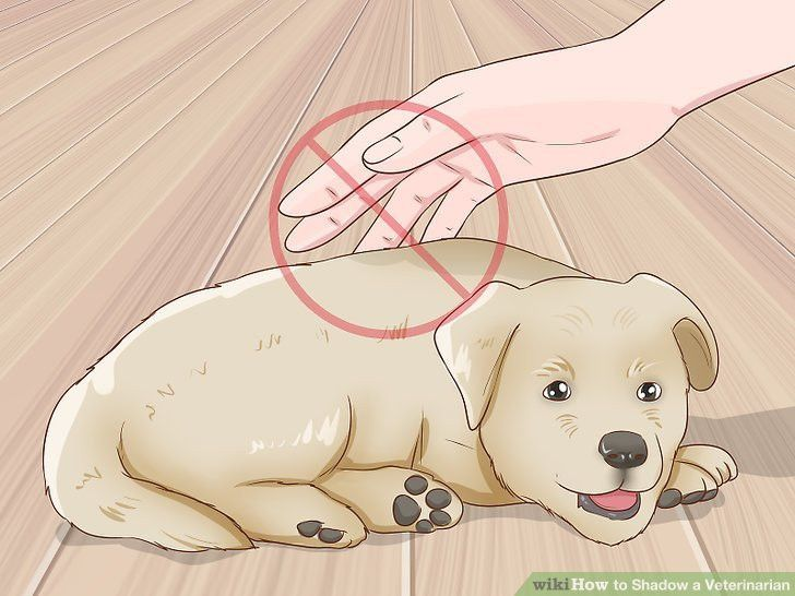 How to Shadow a Veterinarian (with Pictures) - wikiHow