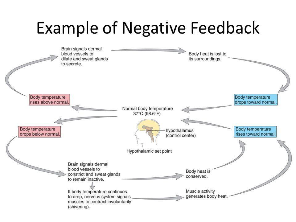 Positive and Negative Feedback Loops. A. Negative Feedback CO 2 ...