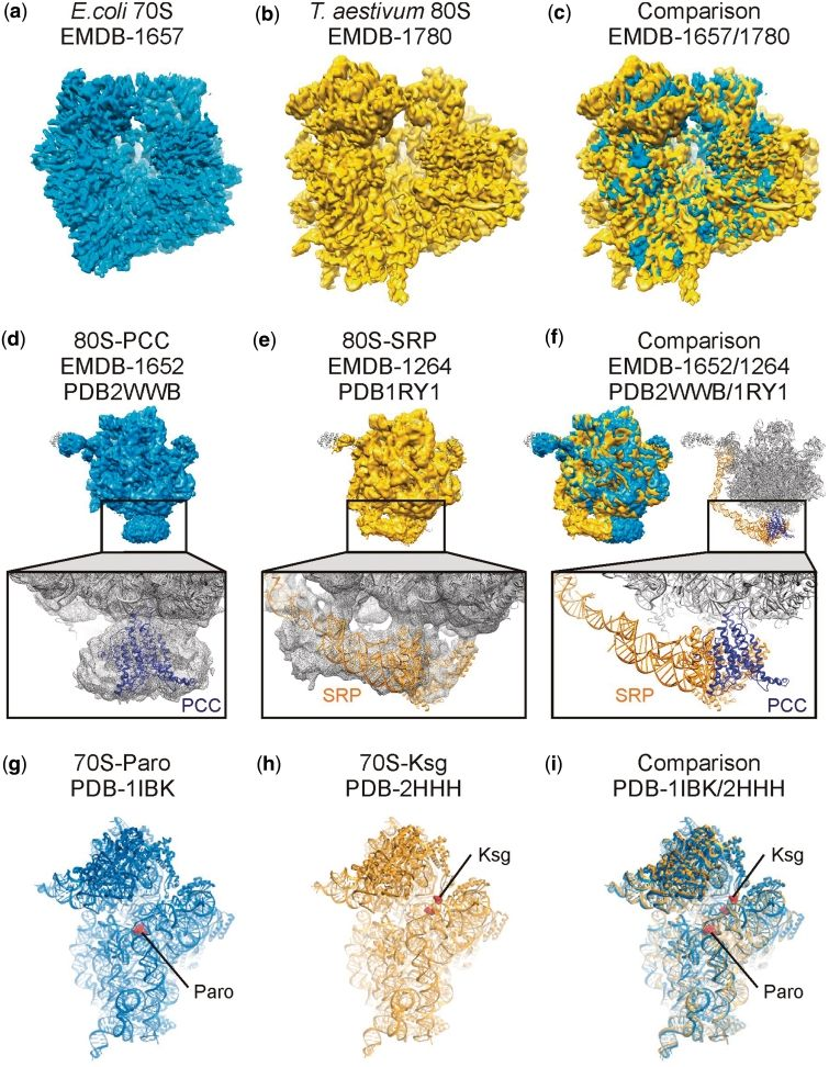 Example comparisons of DARC-aligned EMDB cryo-EM maps and PDB ...