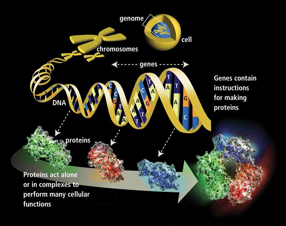 molecularmachine.png