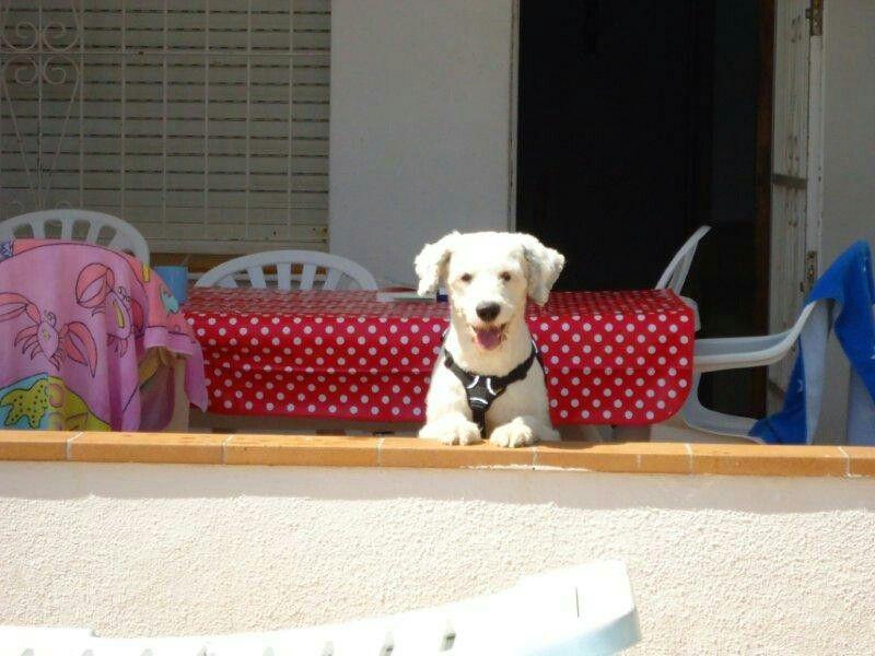 Golden Retriever Puppies For Sale In Ohio Craigslist Ideas