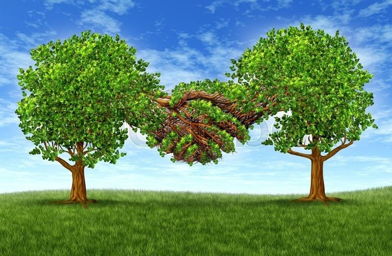Business partnership growth success with two growing gree trees in ...