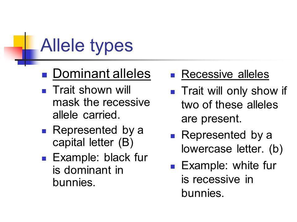 Mendelian Genetics Some of the Basics. Alleles Alleles are ...