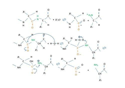 Structural Biochemistry/Enzyme Catalytic Mechanism/Hydrolysis ...