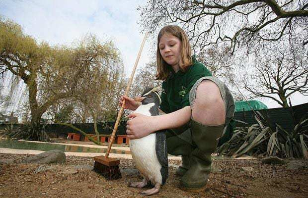 School children get to be zookeepers at London Zoo - Telegraph