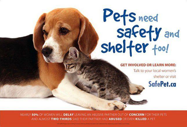 SafePet Program | Ontario Veterinary Medical Association