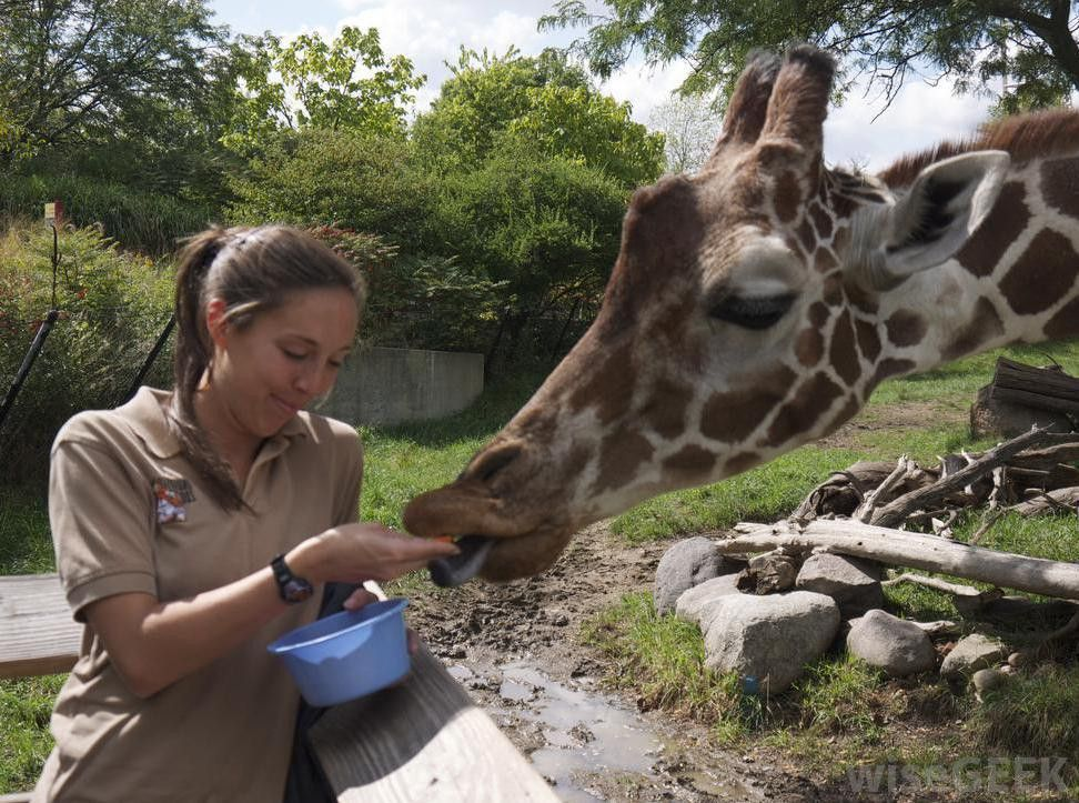How can I Become a Zookeeper? (with pictures)