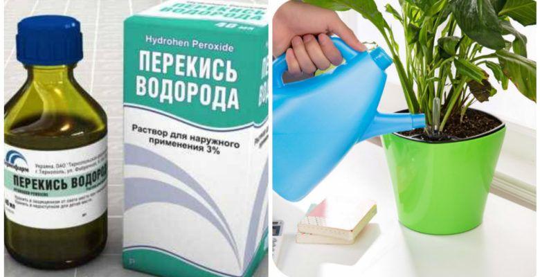 Можно ли поливать рассаду перекисью водорода отзывы