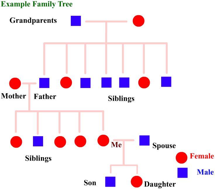 Human Family Tree | WormClassroom