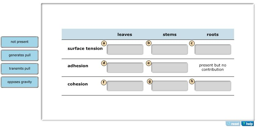 The Roles Of Surface Tension, Cohesion, And Adhesi... | Chegg.com