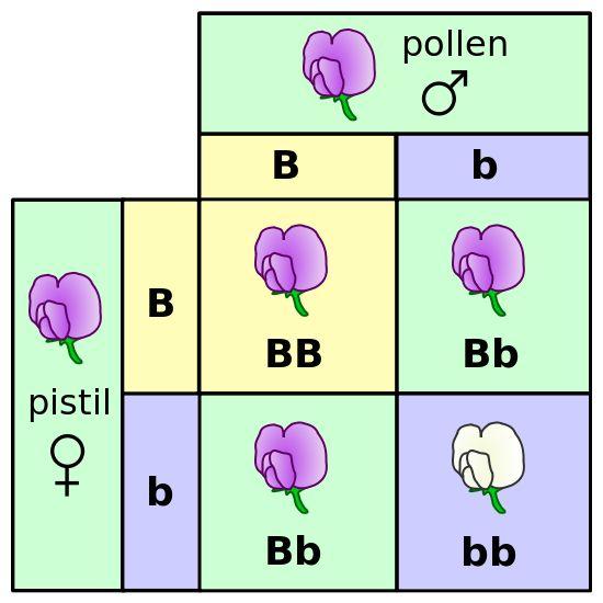 Difference Between Genotype and Phenotype - Pediaa.Com