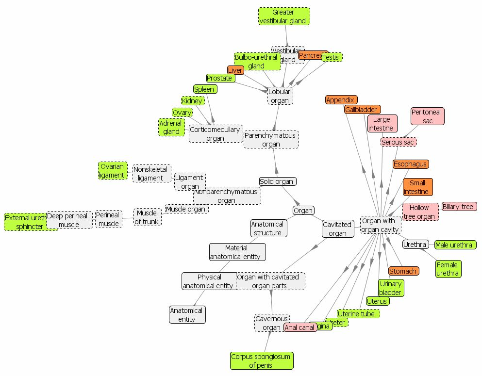 Realizing the Potential of Reference Ontologies for the Semantic ...