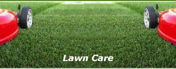 5 Lawn Care Tips to Increase Your Home's Curb Appeal - Green ...