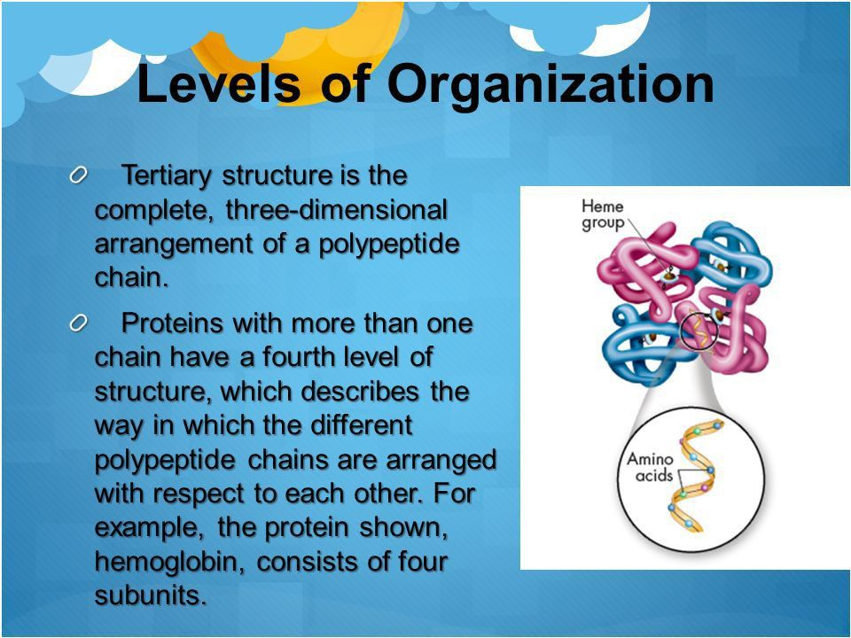 Proteins. Protein Proteins are polymers of molecules called amino ...