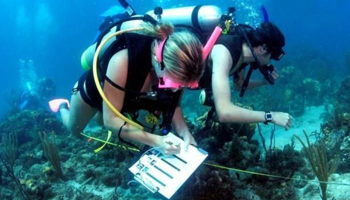 How to Become a Marine Biologist in the US