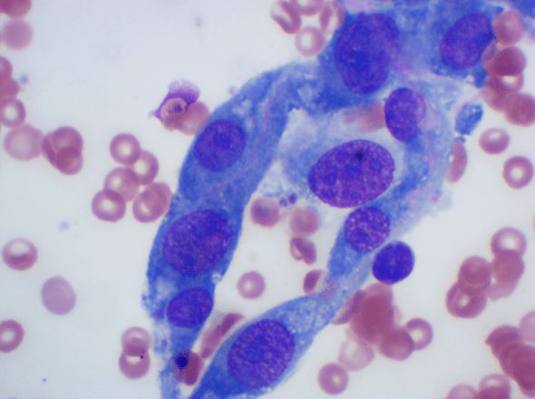 Clinical Pathology | Seattle Veterinary Specialists
