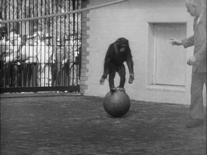 Feat / Animal Training / Animal / Germany / 1950-1959 | HD Stock ...