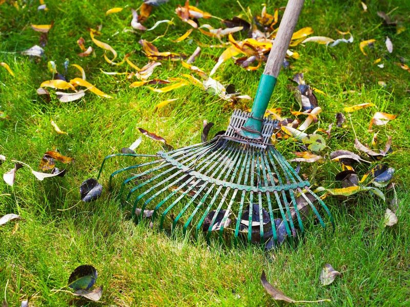 Good Fall Lawn Care Tips for the Sake of Spring and Summer - Yard Day