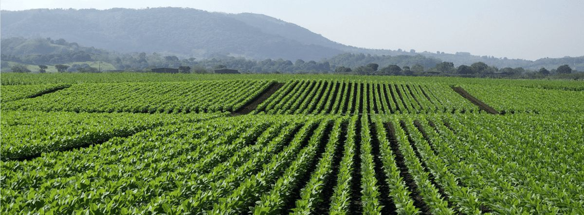 Farmer Recoups Additional $110,000 in Crop Losses Thanks to Drone ...