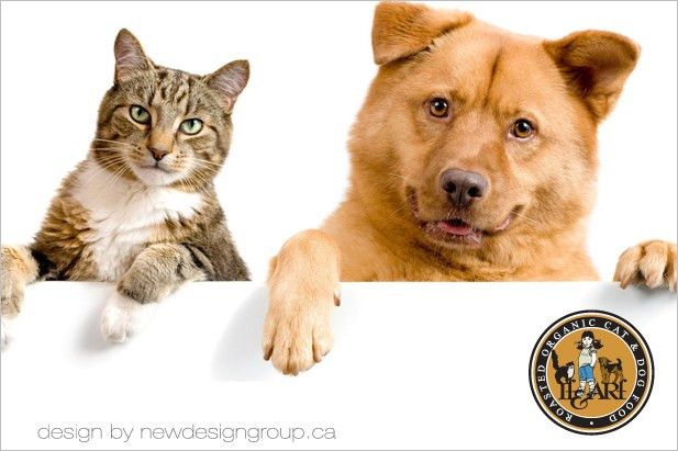How to start a pet business in Ontario. Promotional info guide ...