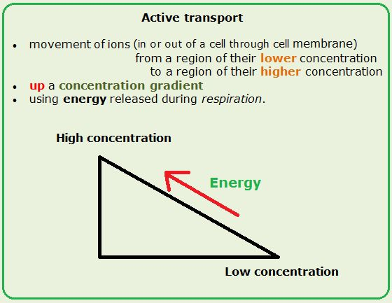 Active transport - Biology Notes for IGCSE 2014