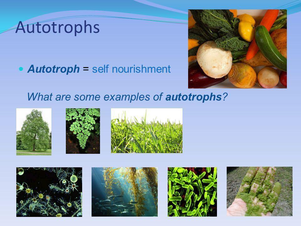 Obtaining energy & nutrients for life. Autotrophs Autotroph ...