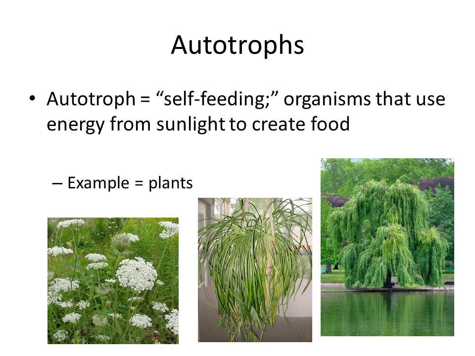 Photosynthesis and Cellular Respiration - ppt video online download