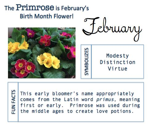 Birth Month Flower – IN BLOOM AT MATLACK FLORIST